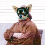 Ben Mason - Dogs N Yaaa