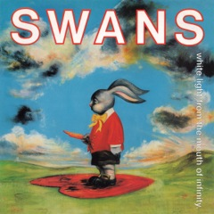 Swans_WhiteLight