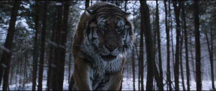 Tiger still