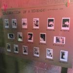 Cabbage Nihilistic Glamour Shots - Installation4