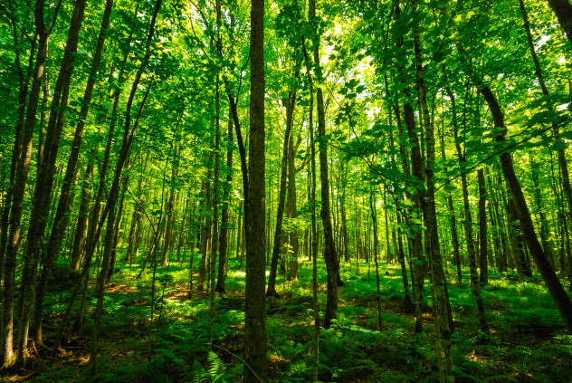 Sweden could become 1st country to enshrine the rights of nature