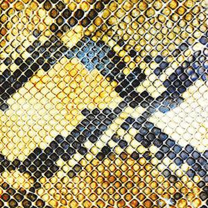 The Amazing Snakeheads: Amphetamine Ballads – album review