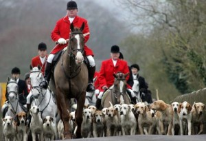 Exclusive: Fox Hunting Rumoured To Be Getting Debated Again In Parliament