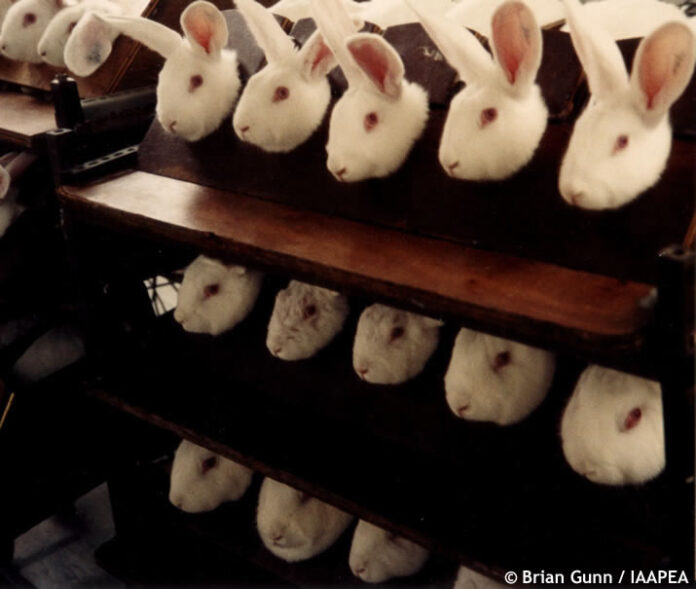 Rabbit's held for cosmetic testing credit Brain Gunn / IAAPEA ©